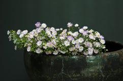 Marguerites en poterie Photo stock