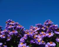 Marguerites et ciel photos libres de droits