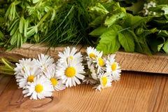 Marguerites et d'autres usines comestibles sauvages s'élevant au printemps Images stock