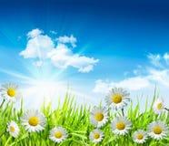 Marguerites et herbe avec le ciel bleu lumineux Images libres de droits
