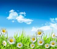 Marguerites et herbe avec le ciel bleu lumineux Photos libres de droits