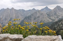 Marguerites et montagnes Photo libre de droits