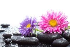 Marguerites et pierres noires humides image stock