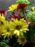 Marguerites jaunes Photos libres de droits