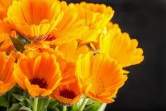 Marguerites jaunes au-dessus de fond noir Photographie stock libre de droits