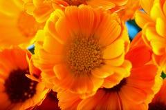 Marguerites jaunes dans un groupe Photo stock