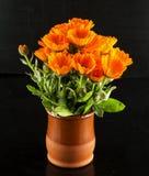 Marguerites jaunes dans un pot de fleurs Photographie stock libre de droits