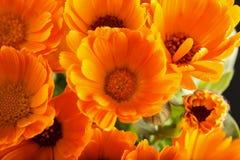 Marguerites jaunes vues d'en haut Photos libres de droits