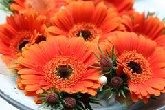 Marguerites nuptiales oranges Image libre de droits