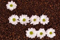 Marguerites sur des grains de café Je t'aime Images stock