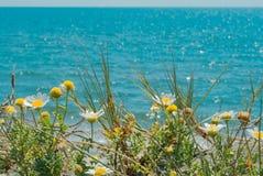 Marguerites sur la plage Images libres de droits