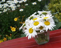 Marguerites sur la table de pique-nique Images stock