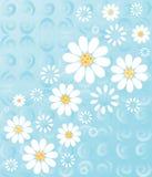 Marguerites sur le bleu Photographie stock