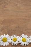 Marguerites sur le fond en bois Images stock