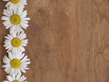 Marguerites sur le fond en bois Photographie stock libre de droits