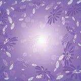 Marguerites sur un fond lilas Image stock