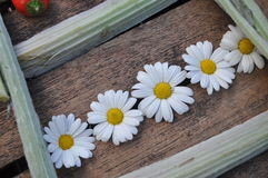 Marguerites sur une table Photographie stock