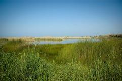 marhsland ландшафта Стоковые Фотографии RF