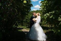 Marié boutonneux et jeune mariée embrassant en parc Images libres de droits