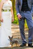 Marié Dog de jeune mariée Image stock