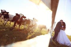 marié et jeune mariée embrassant près de la ferme de vache Photo libre de droits