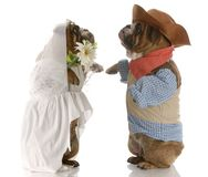 Mariée et marié de crabot photographie stock