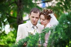 Mariée et marié heureux à la promenade de mariage Photographie stock libre de droits