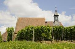 Maria im Weingarten Royalty-vrije Stock Afbeelding