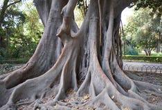 Maria Luisa Park, Seville, Spain. Old tree in Maria Luisa Park, Seville, Spain Royalty Free Stock Image