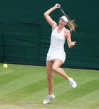 Maria Sharapova Wimbledon Tennis Stock Photos