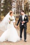 Mariage d'automne en parc, jeunes mariés images libres de droits