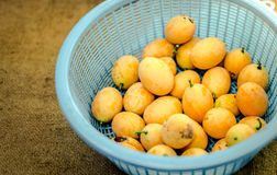 Marian plum in basket Stock Image