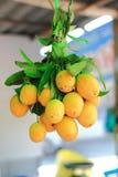 Marian plum or Bouea macrophylla Stock Photos