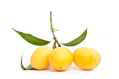 The Marian plum fruit Royalty Free Stock Images