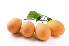 Marian plum fruit Stock Images