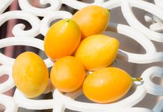 Marian plum Royalty Free Stock Images