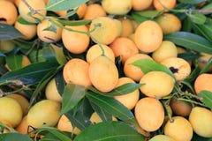 Marian plum Stock Image