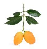 Marian pruim Thais die fruit op witte backgroun wordt geïsoleerd Stock Foto's
