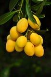 Marianische Frucht Lizenzfreies Stockbild