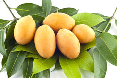Marianische Pflaumefrüchte. stockbilder