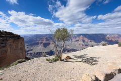 Maricopa Point. Standing trees stand on sandy soil with scenic veiws at Maricopa Point as a background Stock Photo