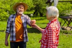 Marido aposentado de irradiação de amor que dá o dente-de-leão a sua esposa fotografia de stock