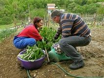 Marido y esposa en su cardo de la cosecha de la granja Fotos de archivo libres de regalías