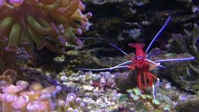Marien aquariumhoogtepunt van tropische vissen en installaties stock video