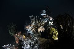Marien het levenskoraalrif op donkerblauwe achtergrond stock foto