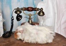 Marien pluizig varken op een lijst dichtbij de telefoon royalty-vrije stock foto