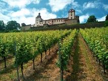 Marienbergkasteel boven wijngaard in Wurzburg royalty-vrije stock foto's