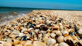 Mariene aard op de kust van de Zwarte Zee in Rusland royalty-vrije stock foto's