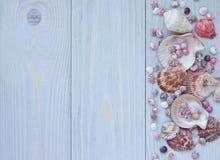 Mariene achtergrond met zeeschelpen op houten planken Grens van zeeschelpen Stock Afbeelding