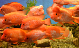 Mariene aquariumvissen Stock Foto's